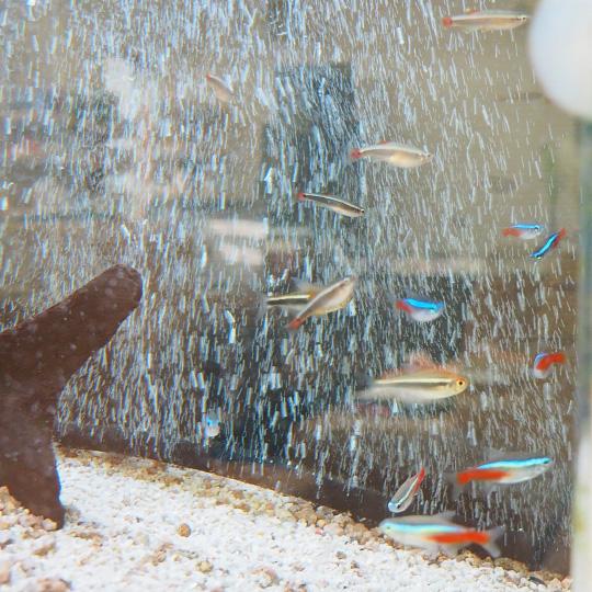 中村五郎薬局内の熱帯魚